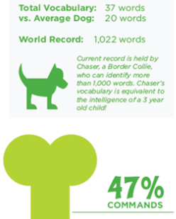 sample dog infographic